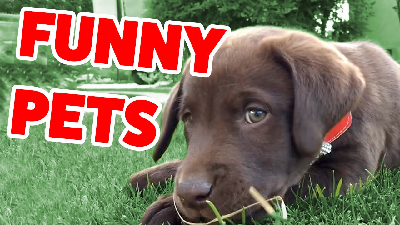 The Funniest Cute Pets & Animals Home Video Bloopers of 2016 Weekly Compilation | Funny Pet Vide