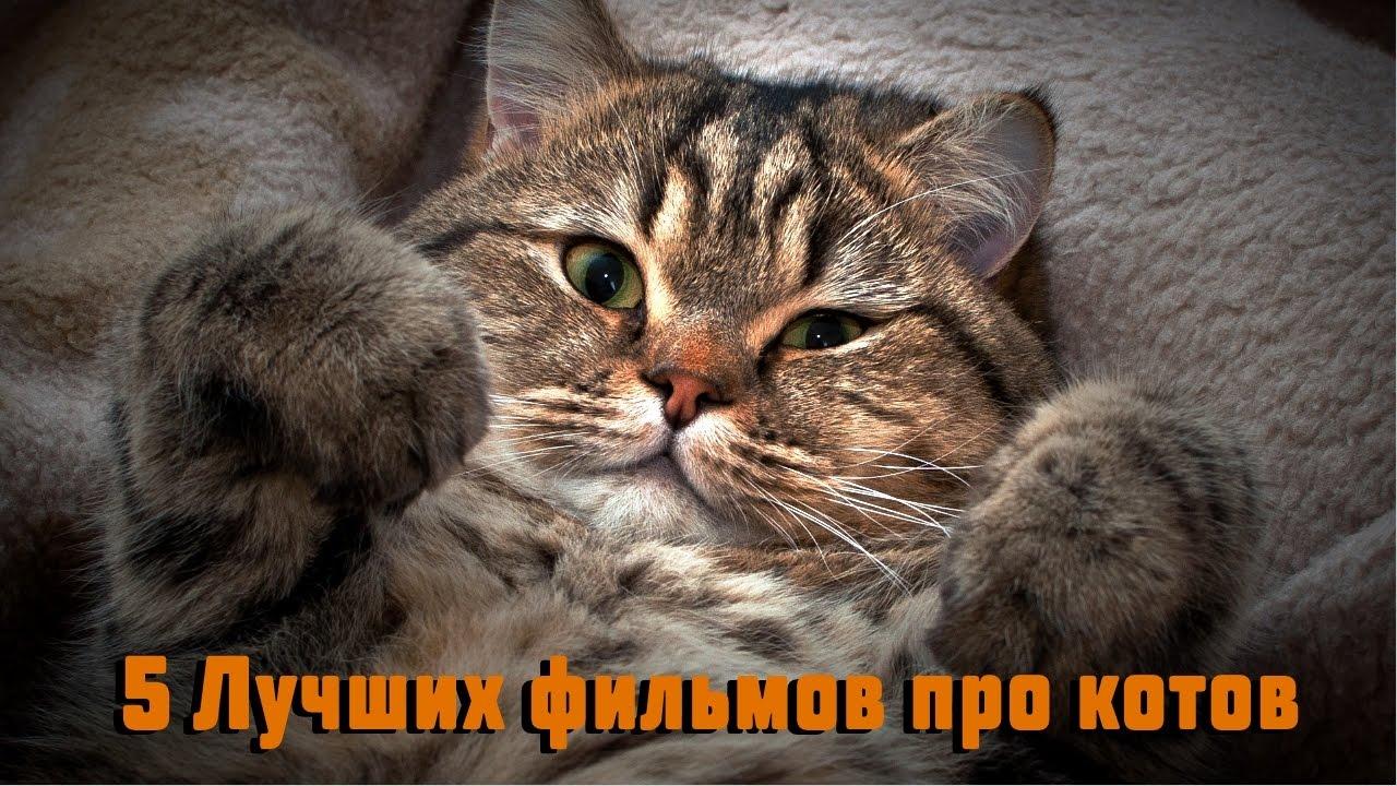 5 Лучших фильмов про кошек - YouTube