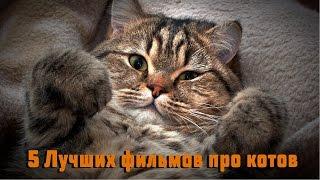 5 Лучших фильмов про кошек