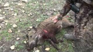 bowhunting hogs south tx quatro b ranch