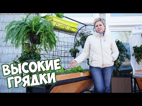 Вопрос: Огород на балконе. Что посадить для красоты и пользы?