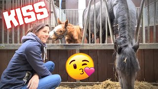 A kiss from Rising Star! Queen👑Uniek doesn't like it | Friesian Horses