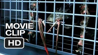 Spiders 3d Movie Clip #1 (2013) Christa Campbell, William Hope Movie Hd