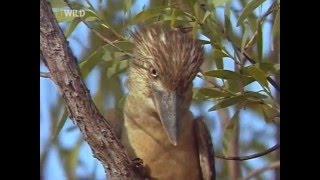 Национальный парк Какаду Австралия.  Документальный фильм.