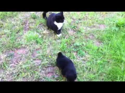 Quand un chat zen met un stop à un bébé rottweiler