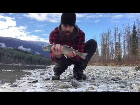 Dolly Varden Fishing And Hike Down The Fraser River On December 1st