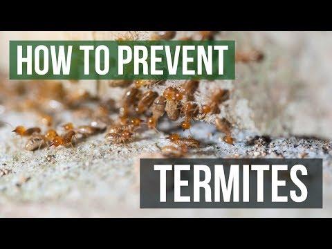How to Prevent Termites