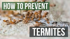 How to Prevent Termites