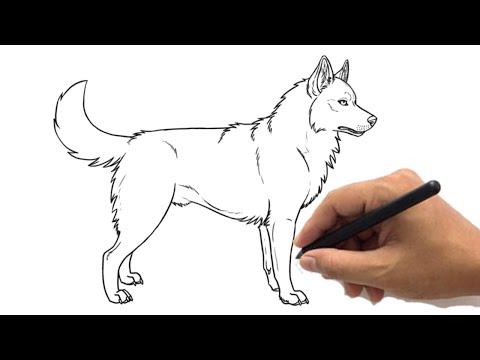 Cute Husky Sketch