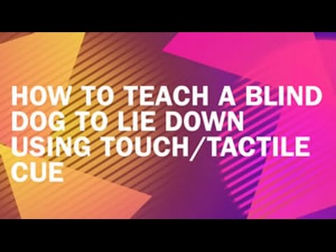 How To Teach A Blind Dog To Lie Down Using Touch Tactile