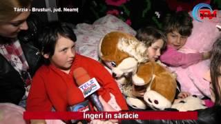Ingeri in saracie