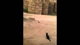 Cat vs bird