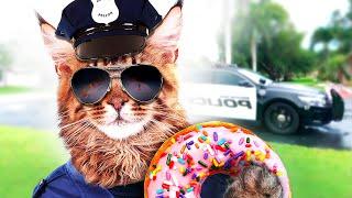 download video musik      BRAVE CAT