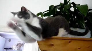 Le chat gargouille