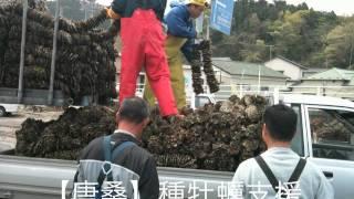 三陸牡蠣の復興 2011年12月