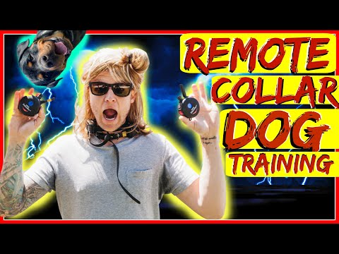 How to use a Remote collar with the place command - Dog Training with Americas Canine Educator