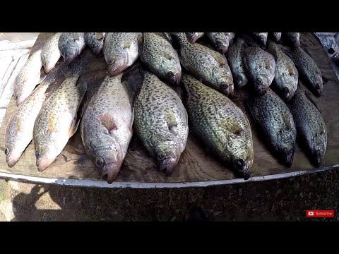 slab-crappie-fishing!-that-was-a-giant!-🎣🎣