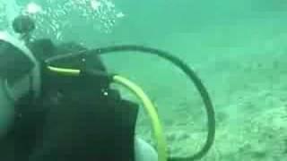 Operation Wallacea Honduras - marine activities