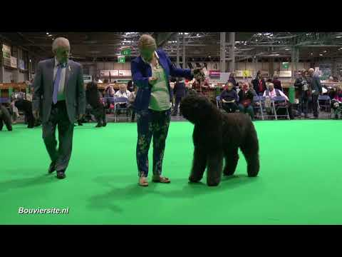 Open dog - crufts 08 mrt 2018