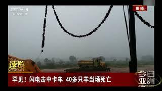 [今日亚洲]速览 罕见!闪电击中卡车 40多只羊当场死亡| CCTV中文国际