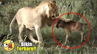 Sulit Dipercaya!! 15 VIDEO HEWAN YANG MENOLONG BINATANG LAINNYA DI DUNIA