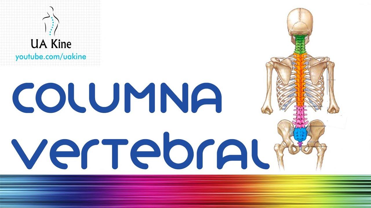Anatomía de la Columna Vertebral - Fisioterapia - YouTube