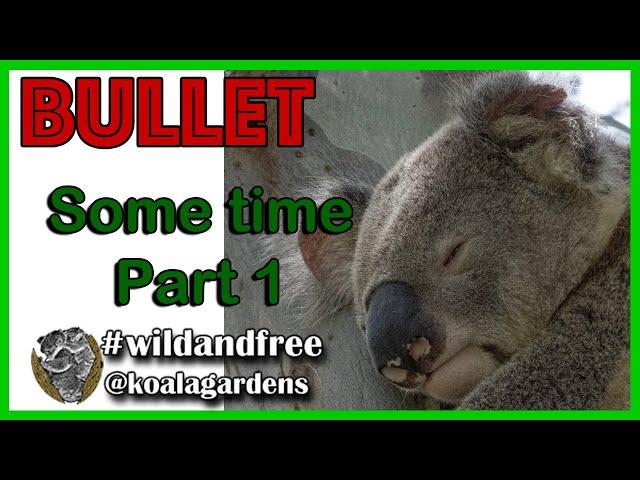 Bullet Part 1