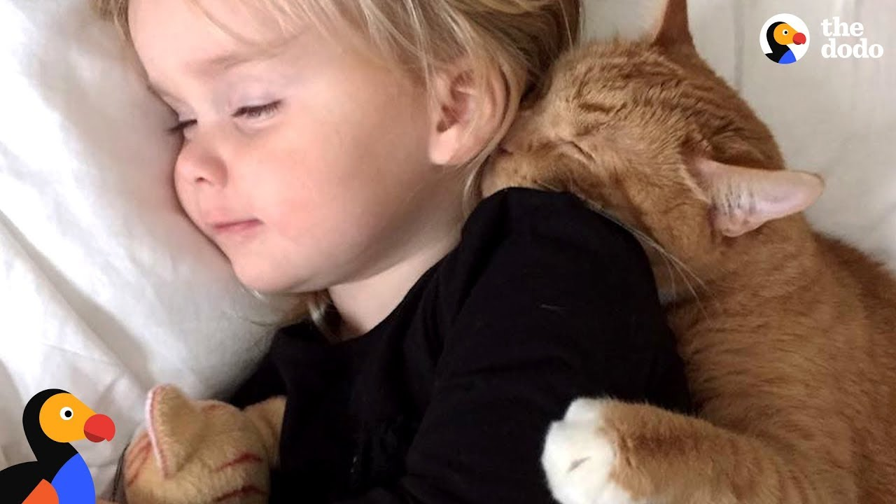 Senior Cat Loves These Little Girls More Than Anything | The Dodo