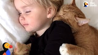 Senior Cat Loves These Little Girls More Than Anything - BAILEY | The Dodo thumbnail