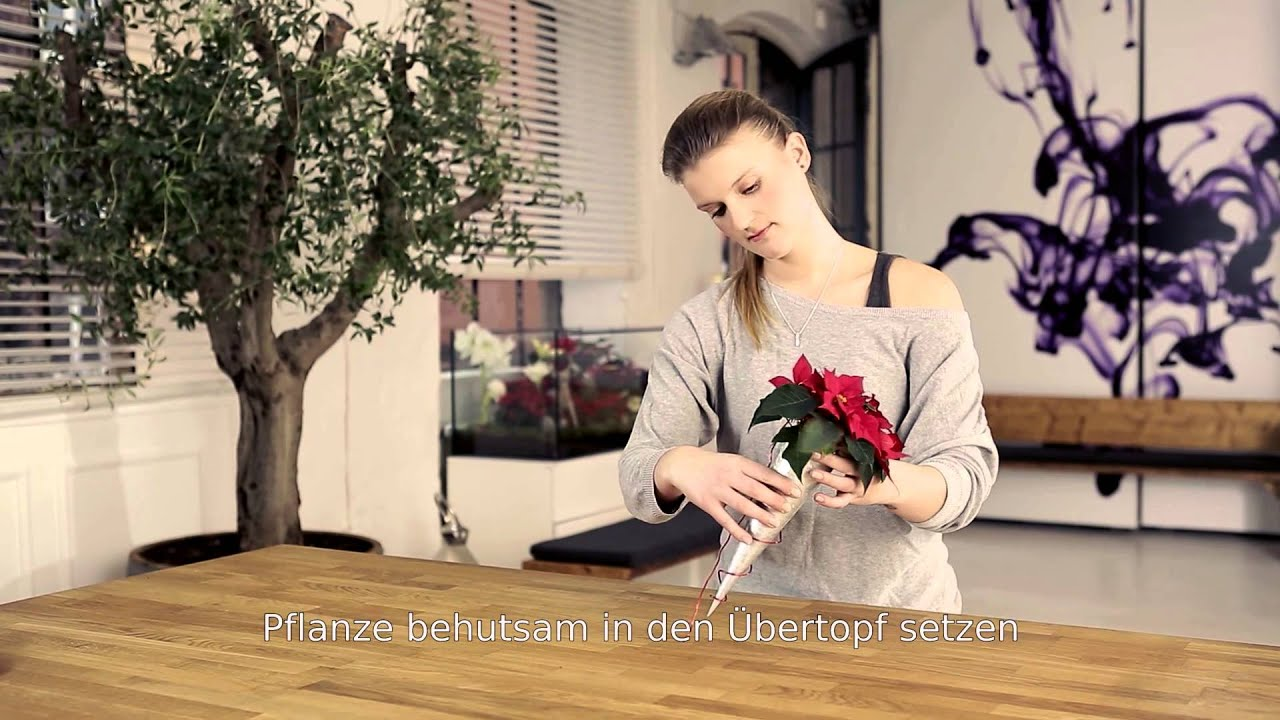 dekorationsideen f r zu hause stuhldekoration mit mini weihnachtssternen youtube. Black Bedroom Furniture Sets. Home Design Ideas