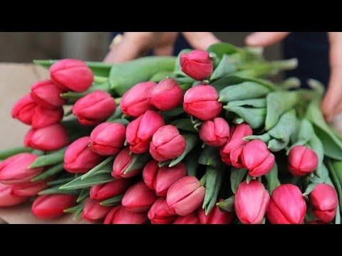 Дарите ЖЕНЩИНАМ цветы! Поздравление с праздником весны!