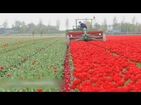 Thu hoạch nông sản ở nước ngoài