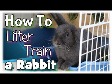 How to Litter Train a Rabbit - YouTube