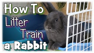 How to Litter Train a Rabbit