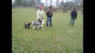 honden op de camping.11-03-2013 009