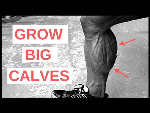 Donkey Calf Raises Could be the Response to Your Lagging Calves
