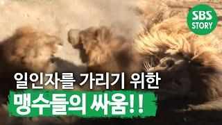 TV동물농장(510회)_08