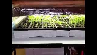 Diy Grow Lamp For Starting Seeds And Baby Chicks Update