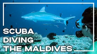 Scuba Diving With Sharks At Ellaidhoo Maldives By Cinnamon   Backpacker Banter