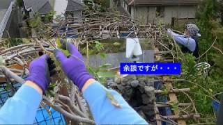 庭木の手入れ:181019 フジの秋剪定