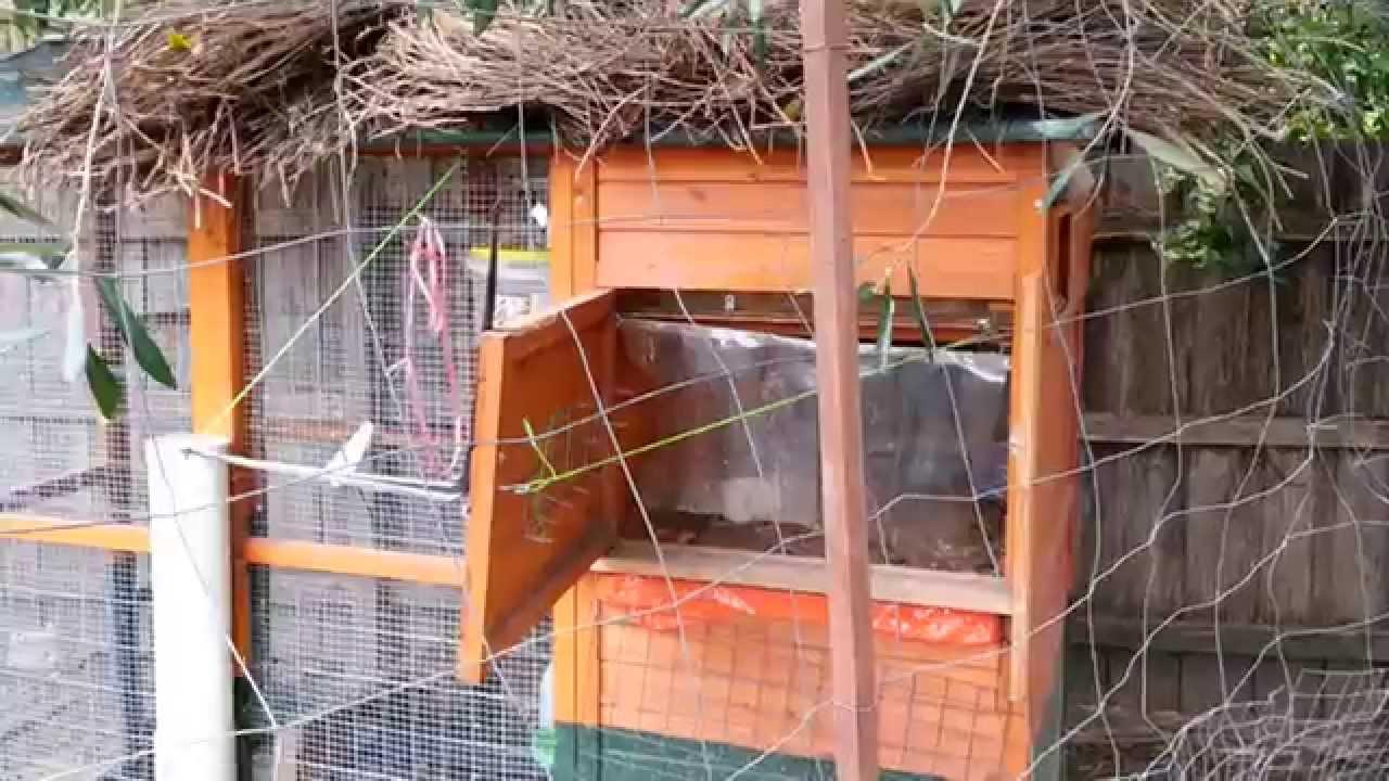 Details Of Auto Swing Door Weight Amp Pulley Chicken Coop