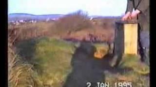 Welsh Springer Spaniels In Wales