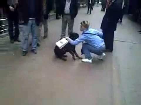 Psychopath Cat Attack Dog