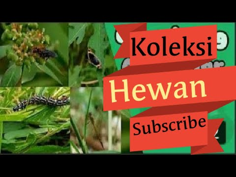 Kumbang dan bunga rumput - YouTube