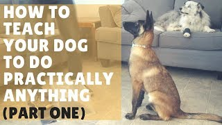 Dog Training 101  Ep. 1: How to Get Started with Training