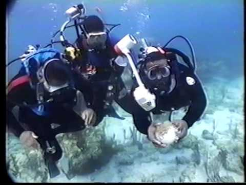 UNEXSO Shallow dives 1990's