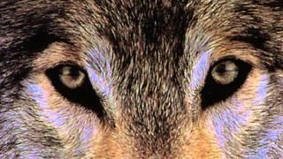 6. Месть (Волки)