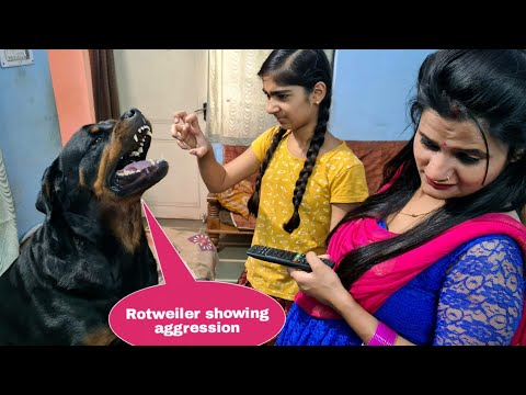 Anshu and Sapna are teasing my dog||funny dog videos.