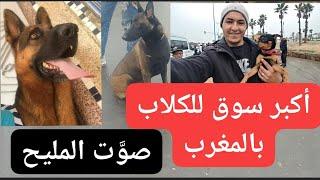 سوق الكلاب القريعة حلقة جديدة #نمشي_فبلاصتك الأحد 16/02/2020 souk Quriaa pour les chiens casablanca