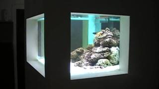 Reef Tank In Wall Part 3